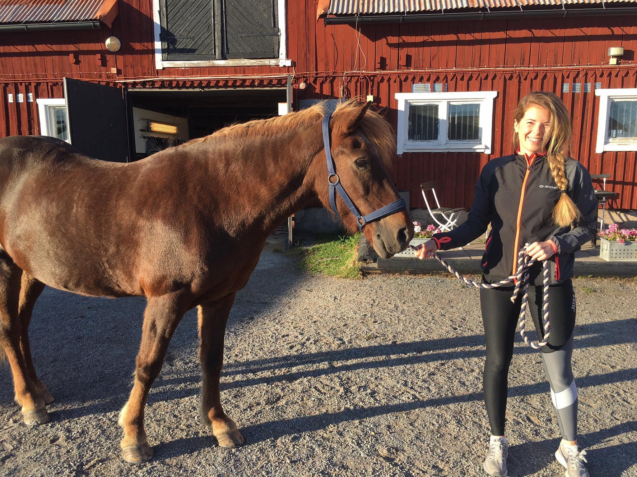 Nybörjare som vill lära sig mer om hästar och ridning Sökes